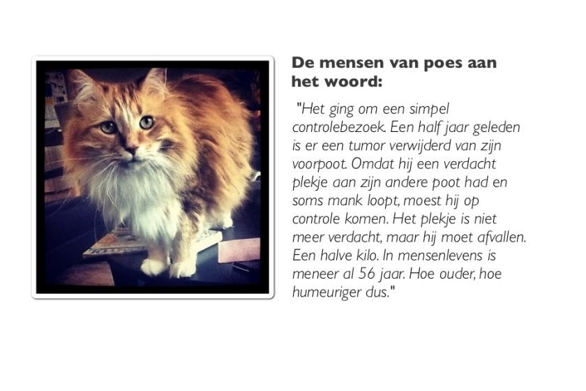foto van kat met citaat
