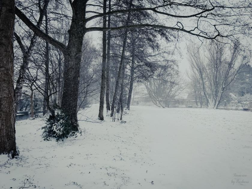 Foto van bomen in de sneeuw